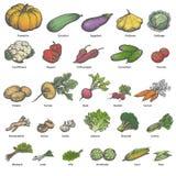 Vegetais maduros coloridos diferentes do grupo grande do vetor Imagem de Stock