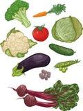 Vegetais mim ilustração royalty free