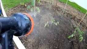 Vegetais molhando no jardim filme