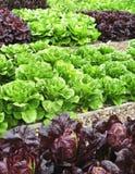 Vegetais na atribuição Fotografia de Stock Royalty Free