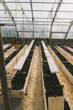 Vegetais na estufa nas camas e nas caixas Foto de Stock