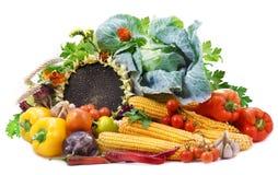 Vegetais no fundo branco Fotografia de Stock