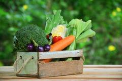 Vegetais no jardim da caixa de madeira e do borrão fotos de stock royalty free