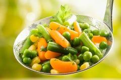 Vegetais novos sortidos recentemente colhidos fotografia de stock royalty free