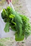 Vegetais orgânicos Foto de Stock Royalty Free