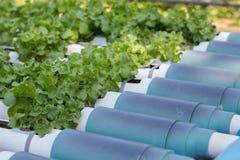 Vegetais orgânicos Foto de Stock