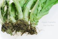 Vegetais orgânicos com terra da parte traseira do branco imagens de stock