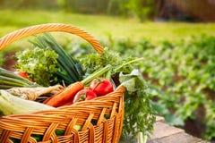 Vegetais orgânicos misturados e cesta de vime Foto de Stock Royalty Free