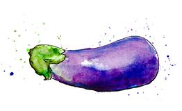 Vegetais pintados aquarela Mão desenhada ilustração royalty free