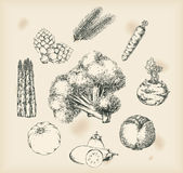 Vegetais que desenham objetos isolados Fotos de Stock