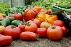 Vegetais recentemente colhidos fotos de stock