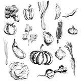 Vegetais tirados mão ajustados Fotos de Stock Royalty Free