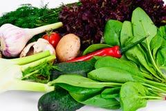 Vegetais tomate, pimenta, cogumelo, pepinos, Radic, erva-doce Fotos de Stock