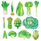 Vegetais verdes Foto de Stock