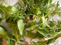 Vegetais verdes da alface Imagem de Stock
