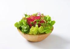 Vegetais verdes misturados na placa de vidro Fotos de Stock