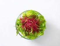 Vegetais verdes misturados na placa de vidro Fotografia de Stock