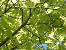 Vegetal тема - текстура ветвей стоковые изображения rf