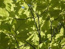 Vegetal тема - текстура ветвей стоковое фото