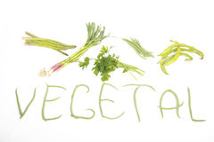 Vegetal Stock Photos