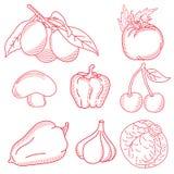 vegetal Fotos de Stock