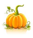 Vegetal alaranjado da abóbora com folhas verdes fotos de stock royalty free