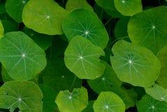 Vegetal background Stock Photos