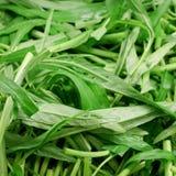 Vegetal chinês da corriola Imagens de Stock