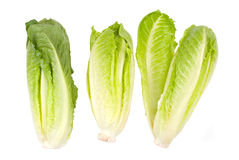 Vegetal da alface no fundo branco Imagens de Stock Royalty Free