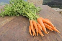 Vegetal da cenoura com folhas Fotografia de Stock