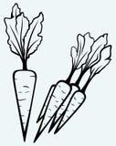 Vegetal da cenoura com folhas Fotos de Stock Royalty Free