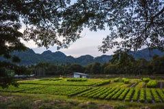 Vegetal da exploração agrícola Imagens de Stock