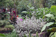Vegetal da mistura e cama do jardim de ervas Fotos de Stock Royalty Free