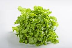 Vegetal da salada Fotos de Stock