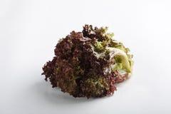 Vegetal da salada Fotos de Stock Royalty Free