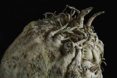 Vegetal de raiz do aipo Imagem de Stock Royalty Free
