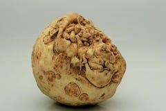 Vegetal de raiz do aipo vermelho Fotos de Stock Royalty Free