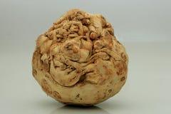 Vegetal de raiz do aipo vermelho Imagem de Stock