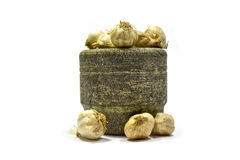 Vegetal do alho Imagem de Stock Royalty Free