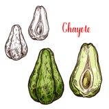 Vegetal do Chayote do esboço mexicano exótico da planta ilustração stock