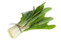 Vegetal do grupo de Ramson Imagem de Stock