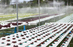 vegetal do hydroponics na casa verde Foto de Stock Royalty Free