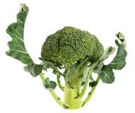 Vegetal dos brócolos isolado no fundo branco Fotos de Stock Royalty Free