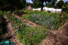 Vegetal e jardim atrás de uma casa Imagens de Stock Royalty Free