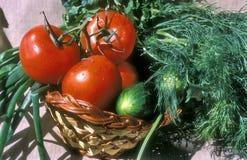 Vegetal e potherbs imagem de stock
