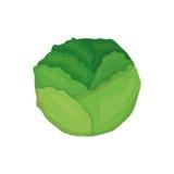 Vegetal fresco da alface ilustração do vetor
