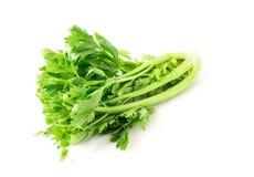 Vegetal fresco do aipo no fundo branco, conceito saudável do alimento Imagens de Stock