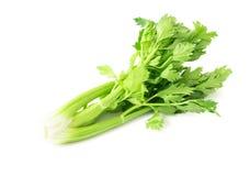 Vegetal fresco do aipo no fundo branco, conceito saudável do alimento Imagens de Stock Royalty Free