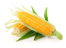 Vegetal fresco do milho com folhas verdes Imagens de Stock