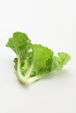 Vegetal fresco verde da alface Imagem de Stock